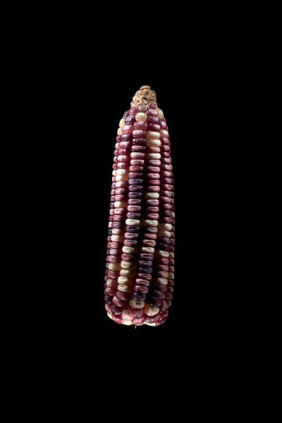 Maiza nativo